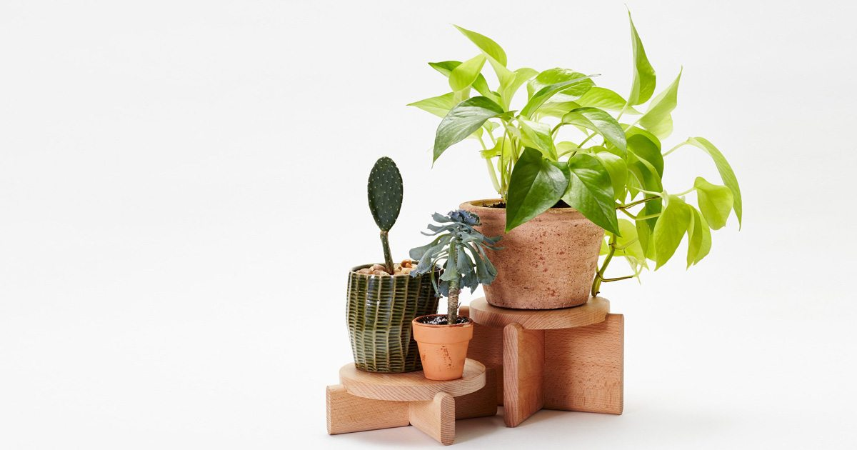 Areaware Plant Pedestals are classic go-to gifts under $50